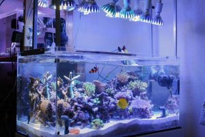 Освещение аквариума светодиодами